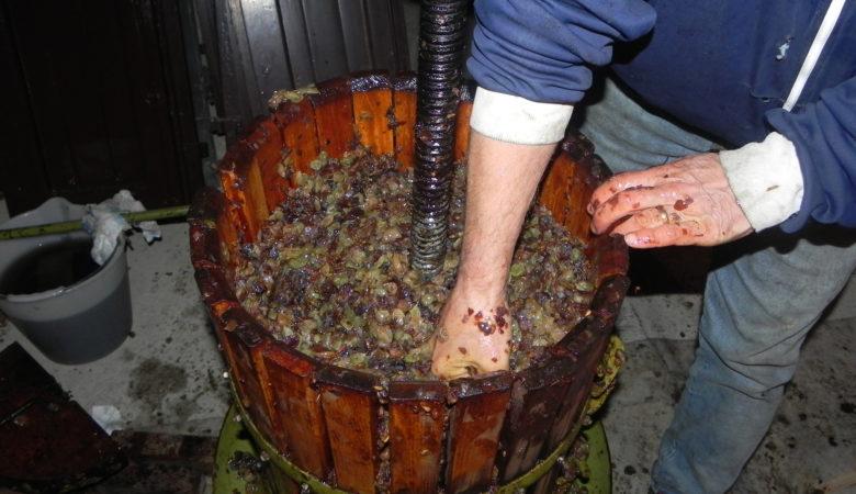 Espremendo uvas nun lagar e sacando o bagaño