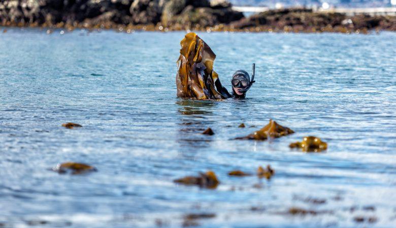 Porto Muíños recolle 300 toneladas de algas ao ano