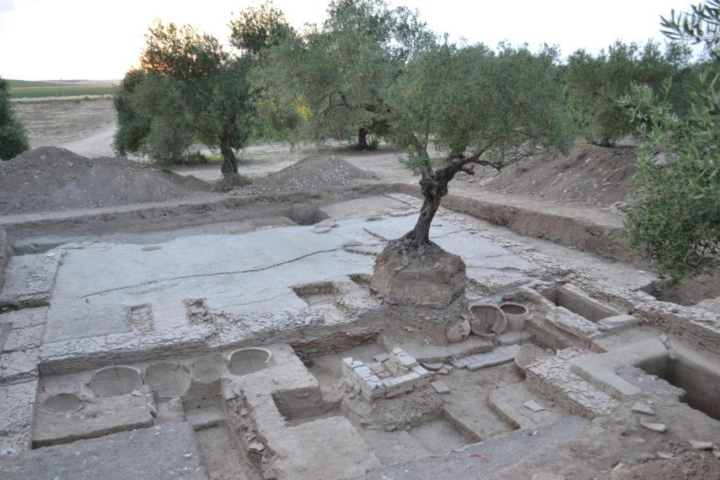 Torcularium da figlina Scimniana (As Delicias, Écija), escavado por membros do proxecto OLEASTRO (LabEx Archimede e Universidade de Montpelier). Fotografía de E. García Vargas