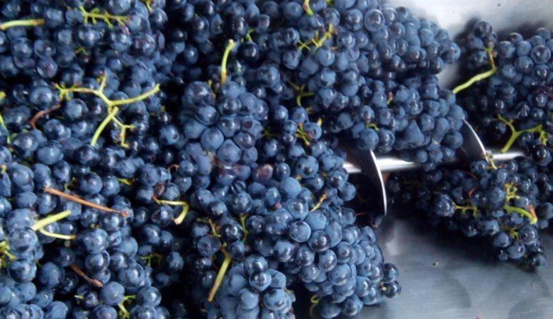 A investigación analizou os funxicidas no medio fermentativo. Foto: Duvi.