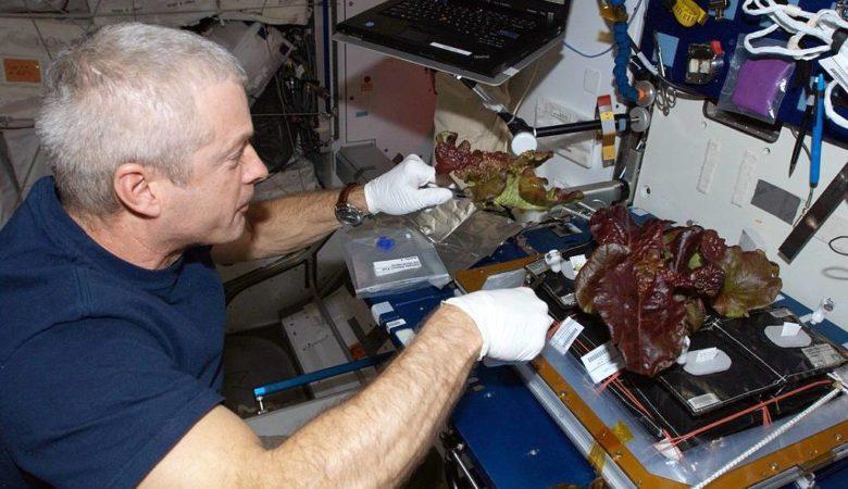 O astronauta Steve Swanson cultivando leitugas vermellas a bordo da Estación Espacial Internacional en xuño de 2014. / Foto: NASA