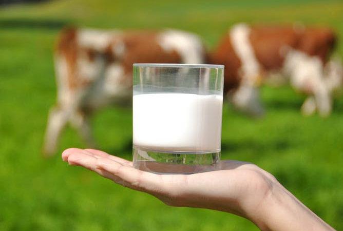 O leite e os lácteos son alimentos fundamentais polos nutrientes que achegan en relación co seu contido calórico