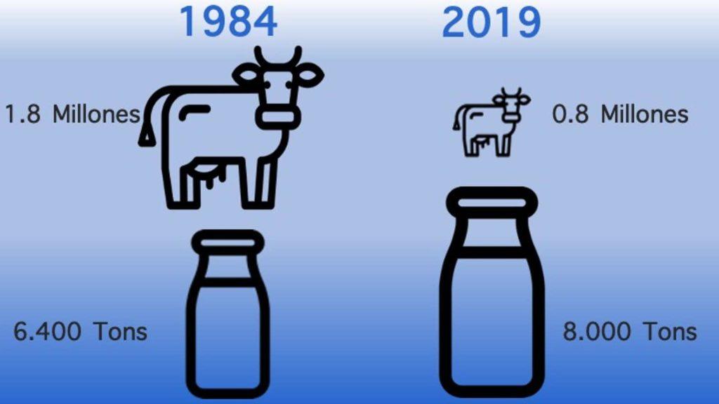 Comparación en número de vacas leiteiras en España e a súa produción entre 1984 e 2019.