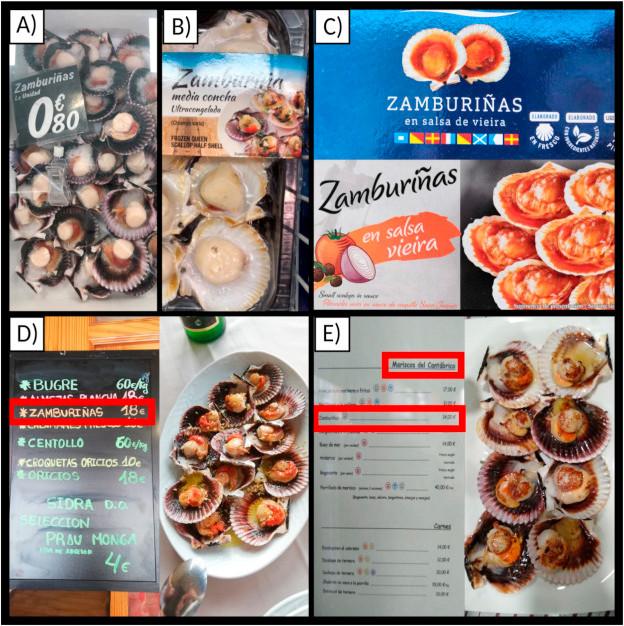 Mostras de suposta zamburiña fresca (A), conxelada (B), enlatada (C) e de restaurantes (D e E), usadas para a investigación. Porén, nome común de zamburiña utilízase para vender vieira do Pacífico (A) e volandeira (B).