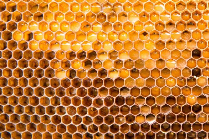 Panel abellas