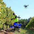 drons vendima
